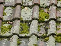 dakpannen met mos
